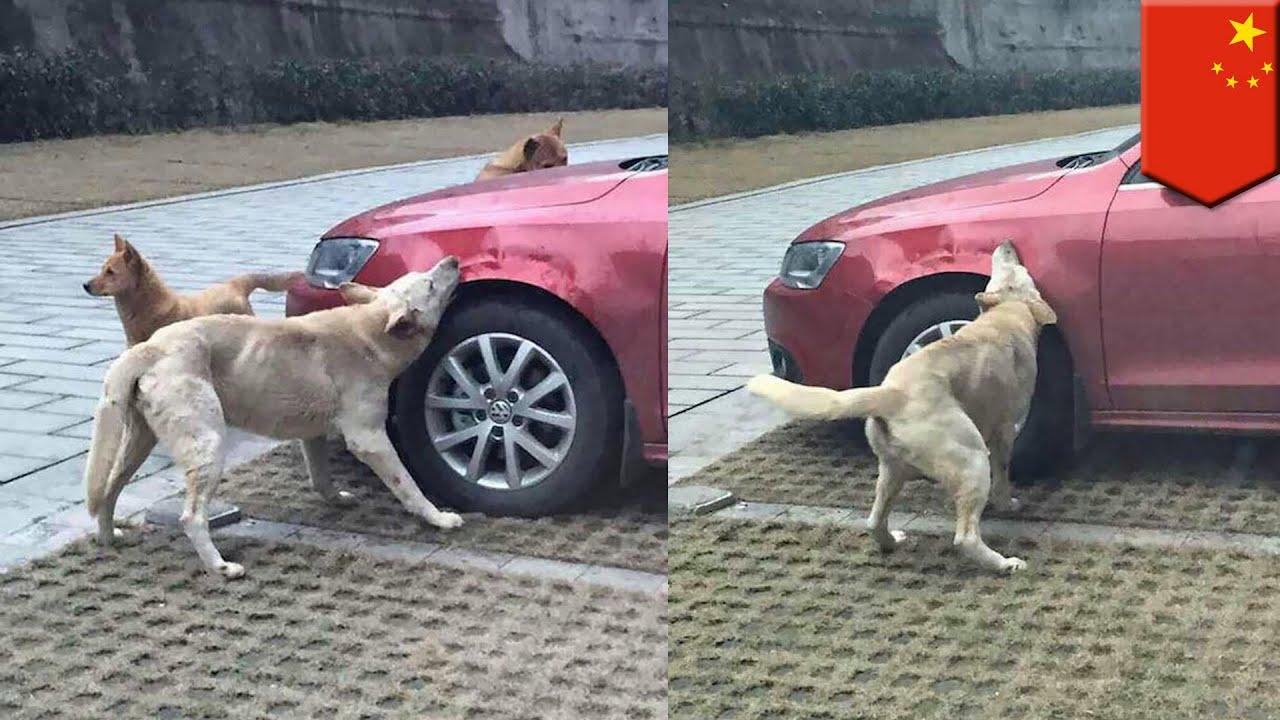 หมากัดรถ ประกันจ่ายไหม แบบนี้ใครรับผิดชอบ